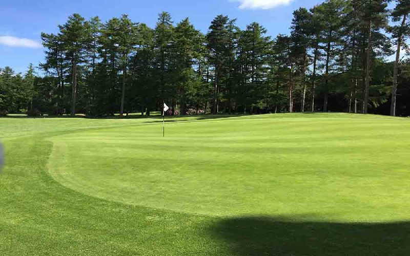 forest pines golf course beeches green