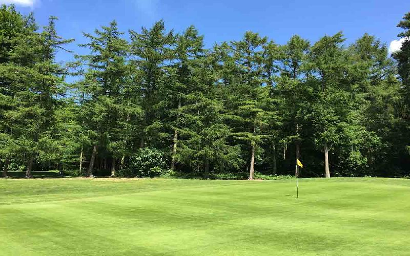 forest pines golf course green