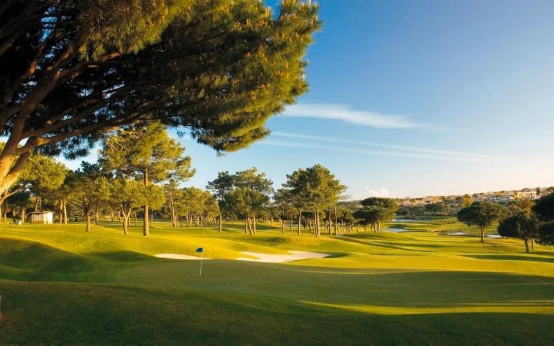 pinheiros altos golf course trees